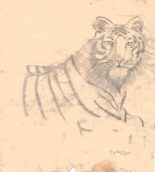 tiger by palapala12
