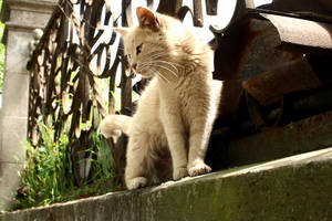 Cat by dilovski