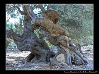 Olive trees shapes. by Figuritza