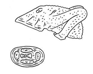 The Future is Wild - Squidflea by Pristichampsus