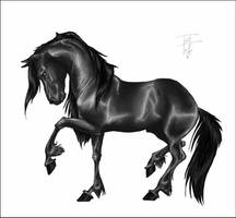 Black Horse by blackseagull