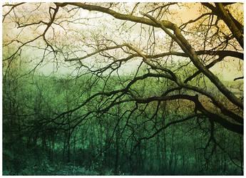 wonder tree. by hiperkarmagirl