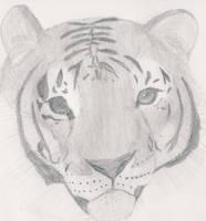 Tiger sketch by 1Meh1