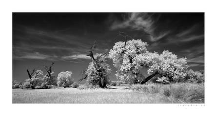 heathenland wilderness by infrared-dreams