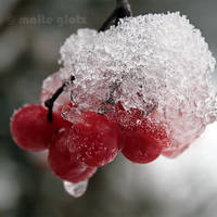Red Berries 2 by Hiersein