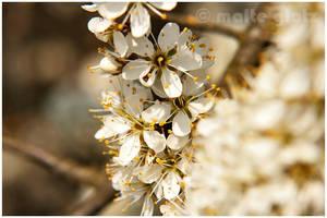 Gozo de l'abeja by Hiersein