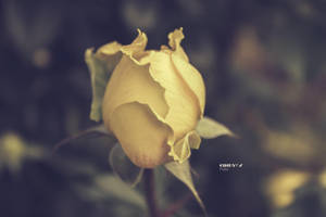 Yellow love by CindysArt