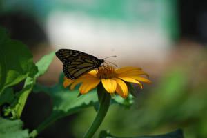 Yellow+Butterfly by MarkFinn