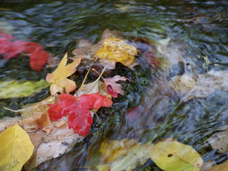 Wet fall by Granther
