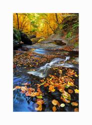 Autumn Carpet by KirlianCamera