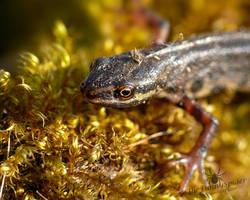 Cute Salamander - close up by TheFunnySpider