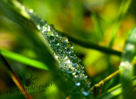 Beautiful Water Drops - Super Macro by TheFunnySpider