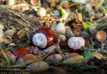 First signs of Autumn - Germany, 2018 by TheFunnySpider
