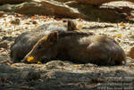 Young wild boars being sleepy by TheFunnySpider