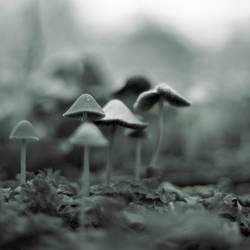 mushroom by tfprince