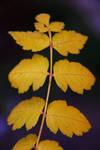 Golden Symmetry by RadishStick