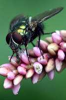 1389 Green fly pollinator by RealMantis