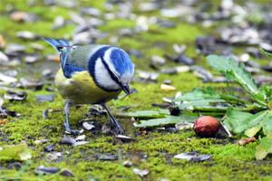 4531 Visitor of the garden #8 by RealMantis