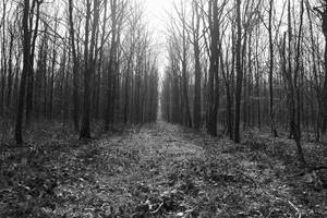 5350 Forest in black and white by RealMantis