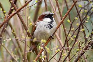 5555 Sparrow by RealMantis