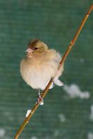 4846 Unknown bird by RealMantis