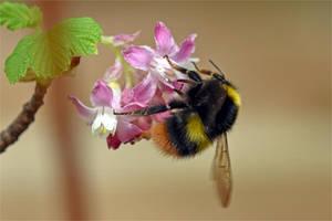 7145 Bumblebee by RealMantis