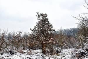 6001 Snowscape by RealMantis