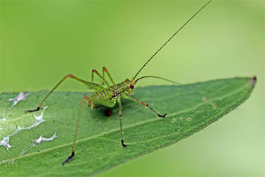 1683 Green bug with black feet by RealMantis