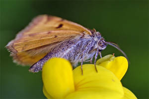 0743 Moth by RealMantis