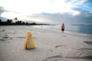 Portrait of a Shell by seyahatname