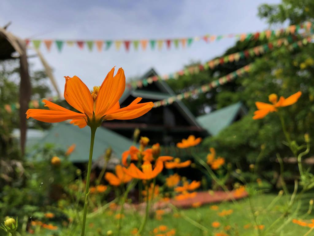 Orange flowers~ by gracee0019