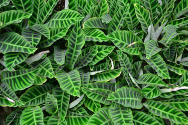 foliage. by aeon-B89