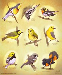 Warblers by aerettberg