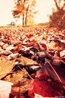 Colors Of Autumn by EveVictus