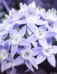 Purple Glow by EveVictus