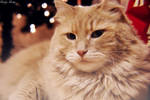 Christmas Cat by EveVictus