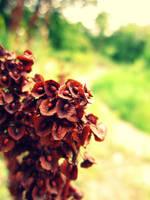 Magic flower by Marianna9
