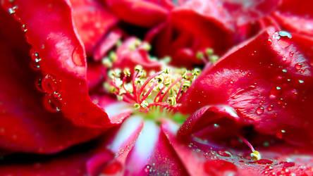 Blossom by Marianna9