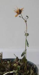 Dead Flower by Ecraseur-Tourniquet