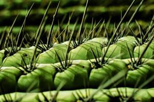 Cactus by LidiaRossana
