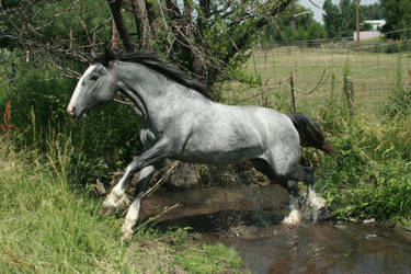 blue roan stock 60 by tragedyseen