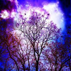 Mystic Skies by DeeWolfBandit