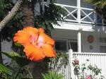 New Zealand flower by Nausicaa-7