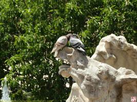 Dove love by kawano-katsuhito