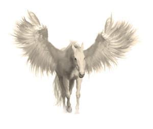 cavaloalado's Profile Picture