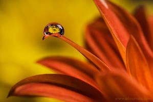 Flower in a Drop by almumen
