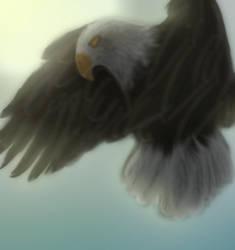 Eagle by MightystarEL