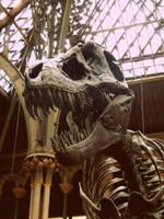 Rex by GoodUsername22