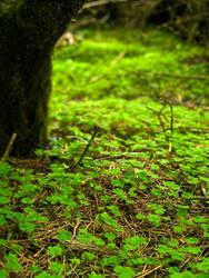 Shamrock Under a Tree by GoodUsername22