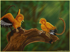 Cotinga Griffons by Typthis